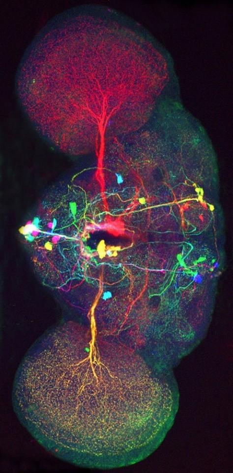 cerebro-960x623